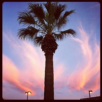 Palm Tree at Sunset by Ann Marie Donahue