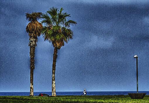 Palm trees by Amr Miqdadi