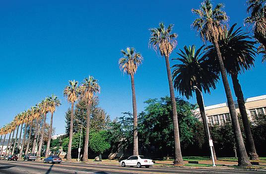 Palm Trees On Street , Los Angeles , California , Usa by W. Buss