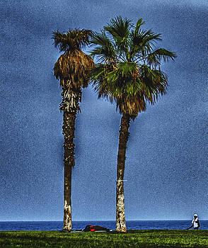 Palm Trees2 by Amr Miqdadi