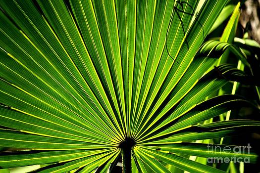 Palmetto Fan by Theresa Willingham