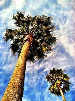 Palms by Raven Janush