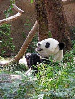 Panda At San Diego Zoo #82 by Ausra Huntington nee Paulauskaite