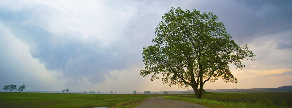 Panoramic Tree after the Storm by Jennifer Brindley
