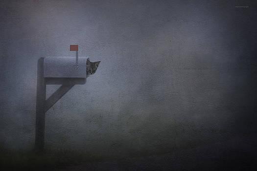 Parcel Post by Ron Jones