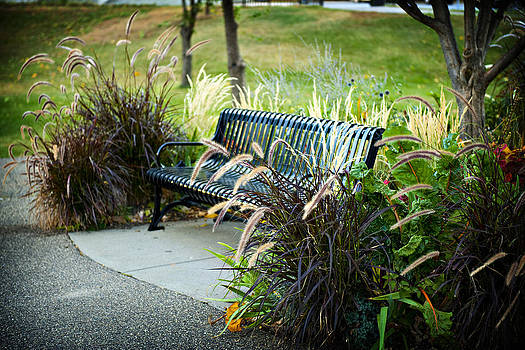 Park Bench by Laurianna Murray