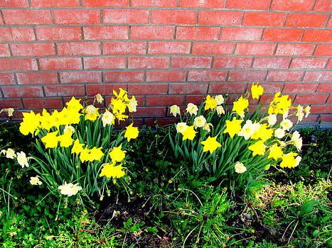 Park Flowers by Amy Bradley