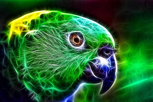 Parrot by Ratan Sonal