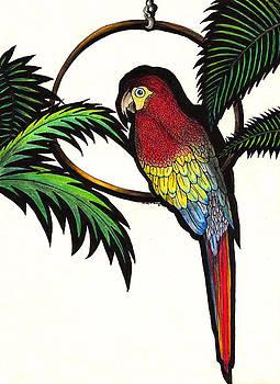 Parrot Shadows by Wendy McKennon