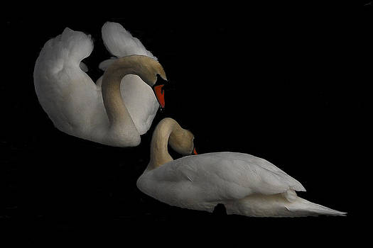 Partners by Peggie Strachan