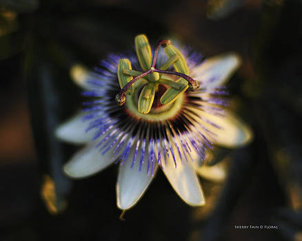 Passion Flower by Sherry Fain