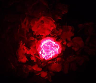 Passionate Glow by Mickey Hatt