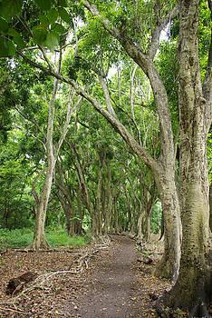 Marilyn Wilson - Path to Honolua Bay