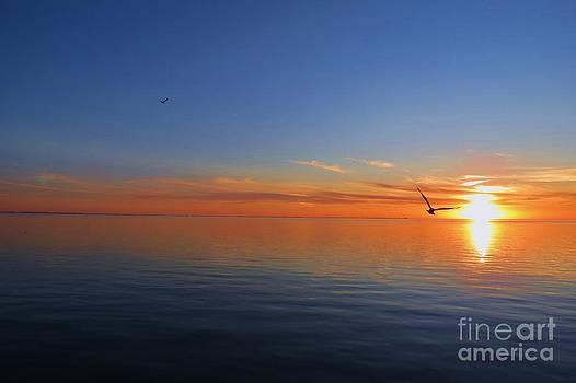 Peace of the Sea  by E Luiza Picciano