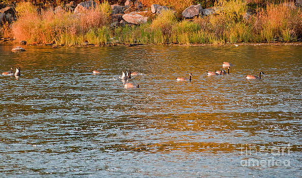 Peaceful Fall by Christine Amstutz