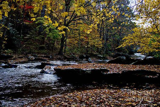 Peaceful Fall Stream by Tom Carriker