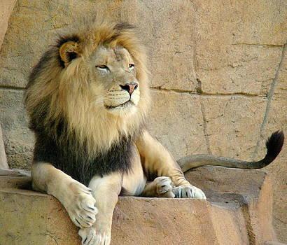Rosanne Jordan - Peaceful Lion