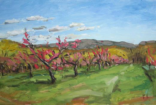 Peach Blossoms Newburgh New York by William Noonan