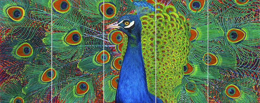 Peacock Pride by Lisa Rodriguez