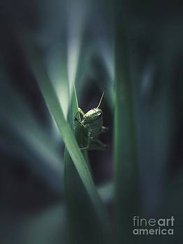 Peek-A-Boo by Christy Bruna