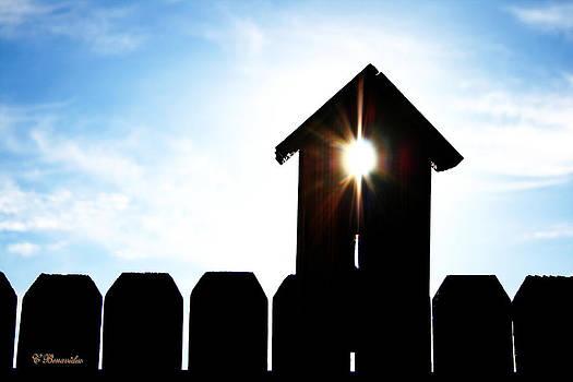 Peeking Sunlight through a Birdhouse by Charles Benavidez