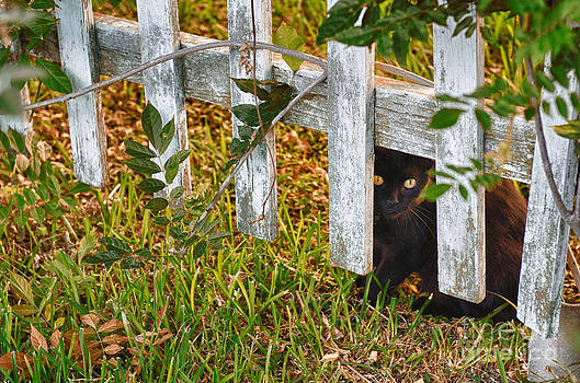 Peeking though the Fence by Jeanne  Woods