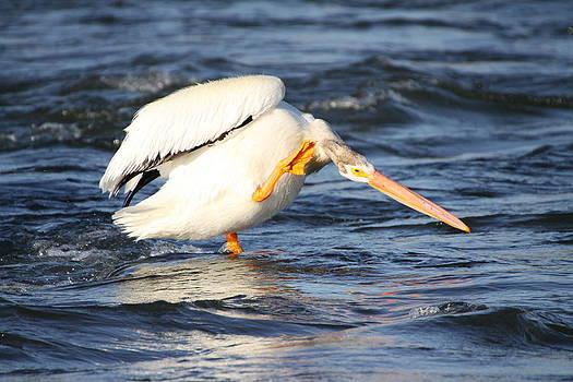 Pelican Itch by Jay Warwick