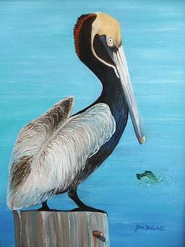 Pelican by June Holwell