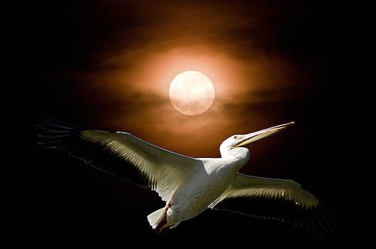 Randall Branham - Pelican Moon