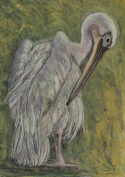 Pelican Portrait by Sarojini Muller