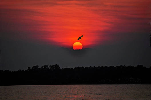 Pelicans Delight by Donnie Smith