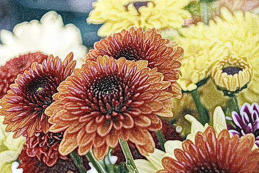 Pencil Portrait of a Zinnia Family by Tanya Jacobson-Smith