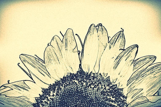 KayeCee Spain - Pencil Sunflower- Fine Art