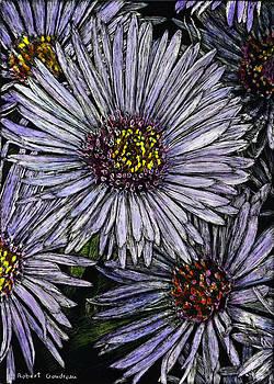 Perennial Asters by Robert Goudreau