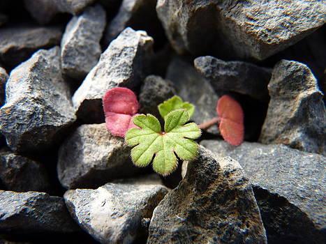 Perseverance by Rebecca Prough