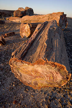 Petrified Forest by Bryan Allen