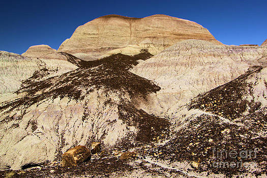 Adam Jewell - Petrified Hills