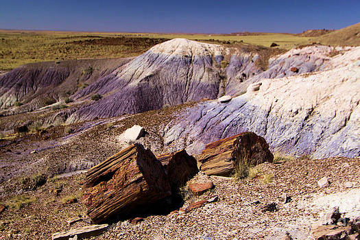 Adam Jewell - Petrified Logs In The Badlands