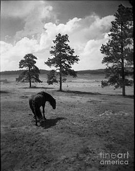 Peyton Colorado by Virginia Furness