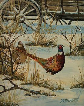 Pheasants by Scott Thompson