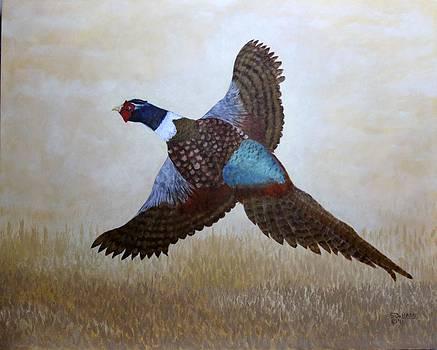 Pheaseant by Sandy DeHaan