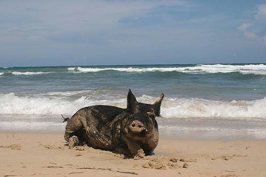Pig In Paradise by George Miller