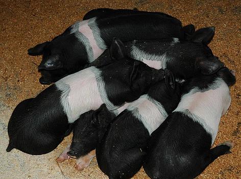 LeeAnn McLaneGoetz McLaneGoetzStudioLLCcom - Pile of Bacon