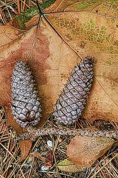 Deborah Benoit - Pine Cones and leaves