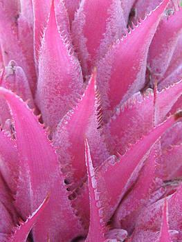 Nikki Marie Smith - Pink Cactus