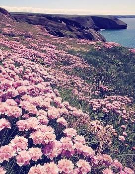 Pink field by Sunkies Fang