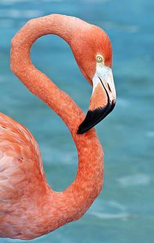 Pink flamingo. by Fernando Barozza