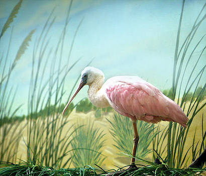 Marilyn Hunt - Pink Flamingo