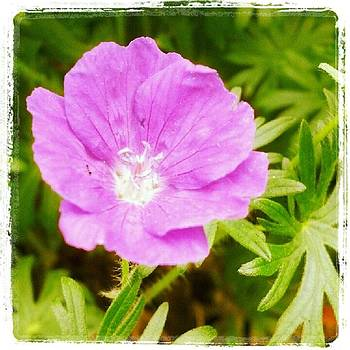 Pink Flower by Christy Bruna