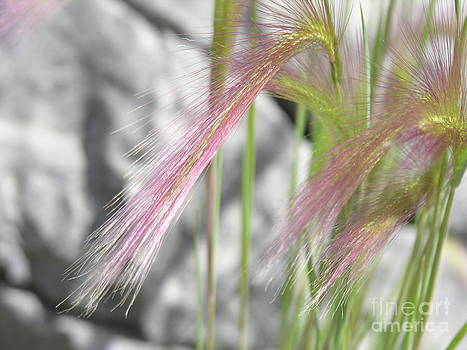 Pink grass by Alan Clifford